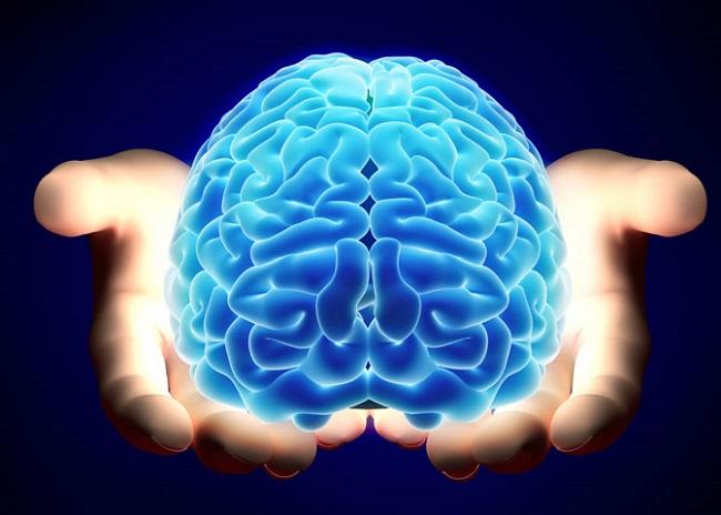 Trọng lượng của não bộ không quyết định đến trí lực