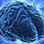 Trọng lượng của não có liên quan gì đến trí lực không?