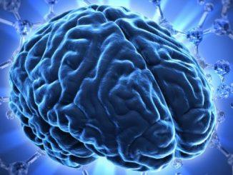 Não người do các tế bào thần kinh và tế bào thần kinh đệm tạo thành
